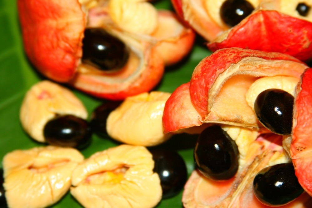 Jerk centre Ackee-fruit